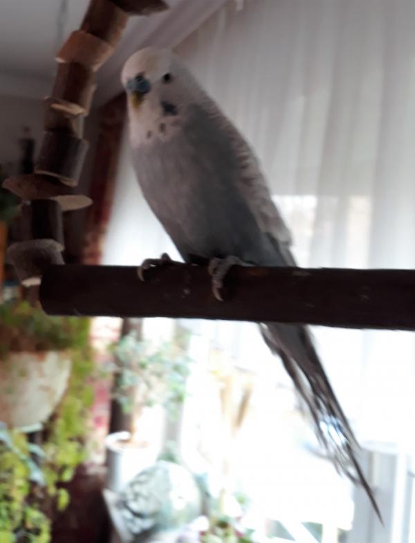 Ludwig auf seinem Aussichtspaltz