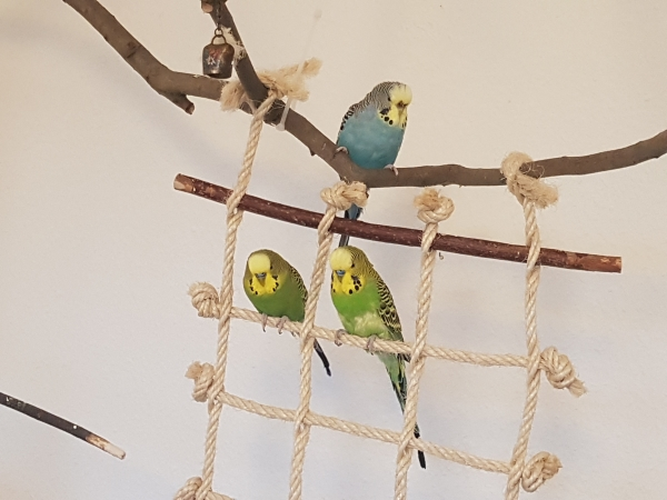 My Birdys Rudi, Billy und Susi