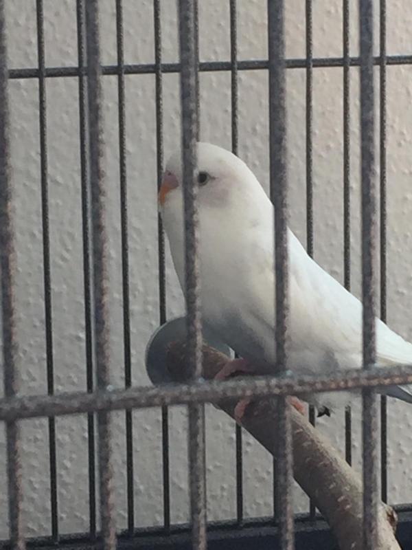 Yoshi hinter Gittern