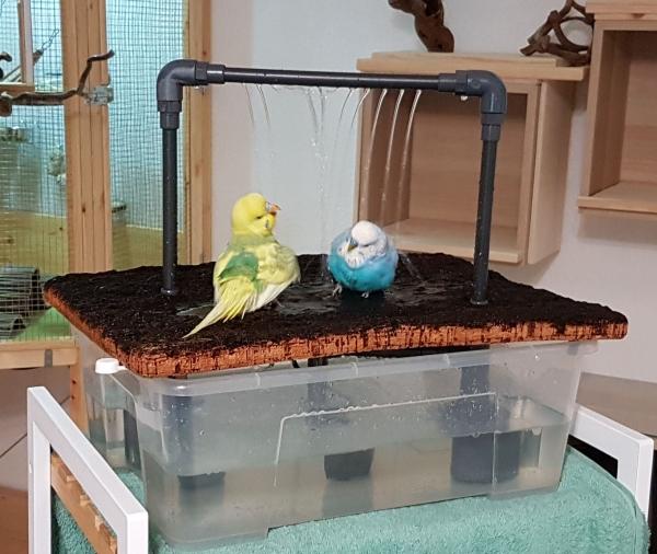 Wellis sind doch Wasservögel