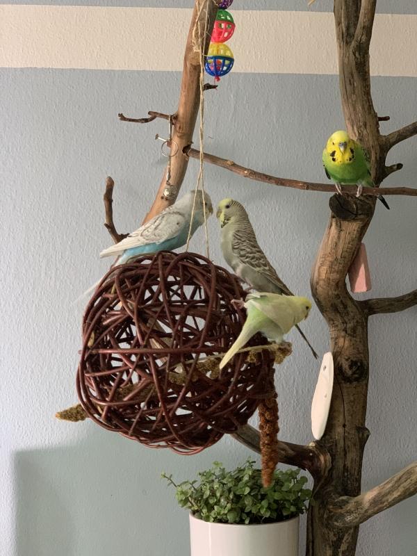 Die Entenbande beim Toben