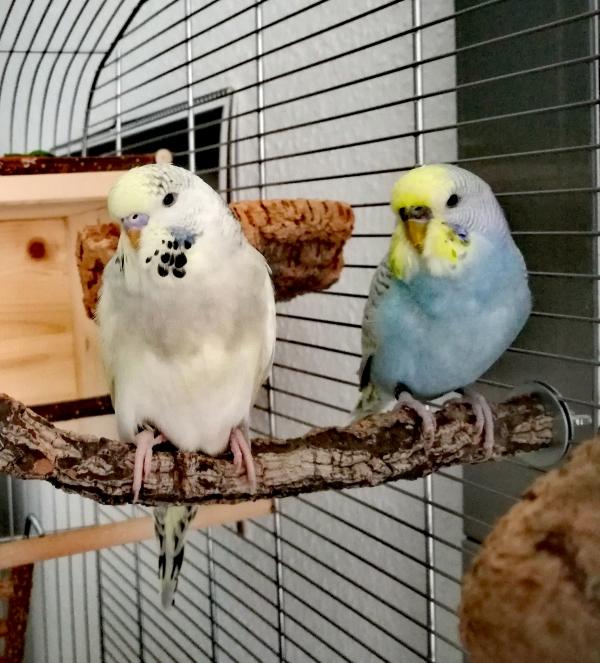 Hedwig & Knoepfchen