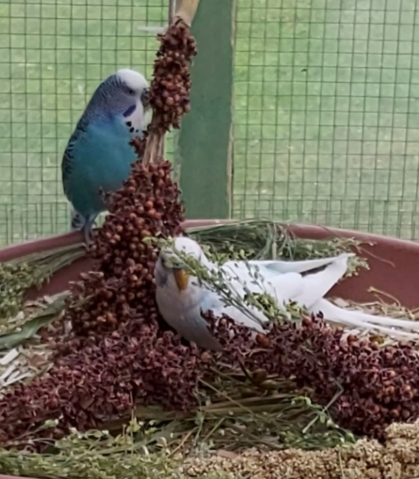 Blue u Vico