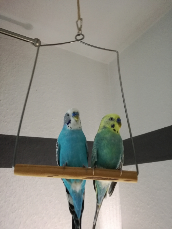 Hugo & Charlie
