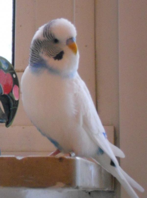 Falco führt etwas im Schilde