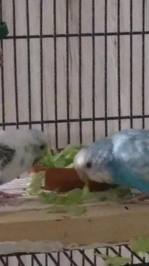 Salat knabberei