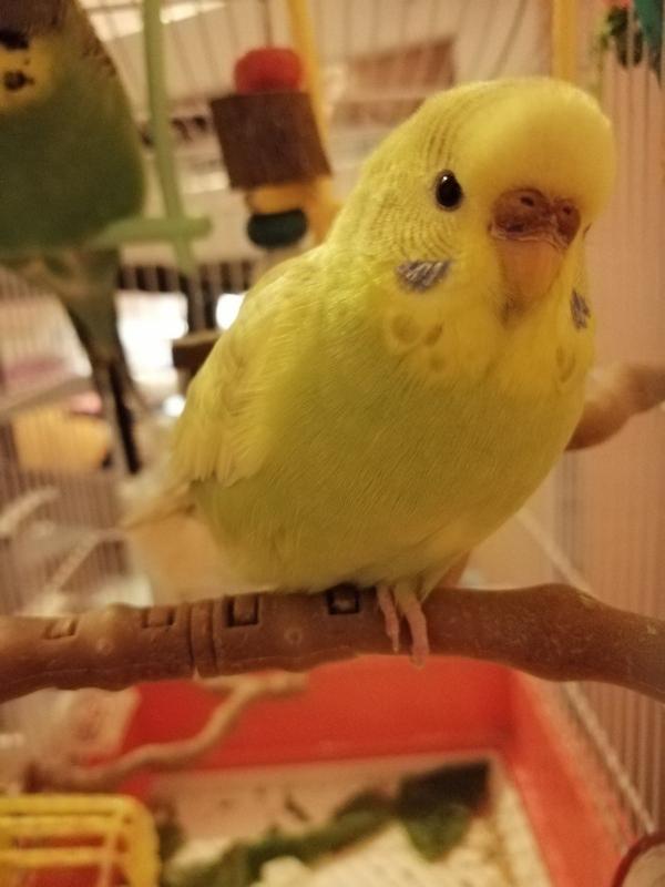 Anny, eine kluge Beobachterin während ein Meisenvogel kam