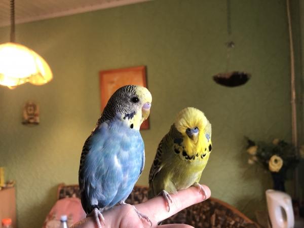 Bubi und Elvis