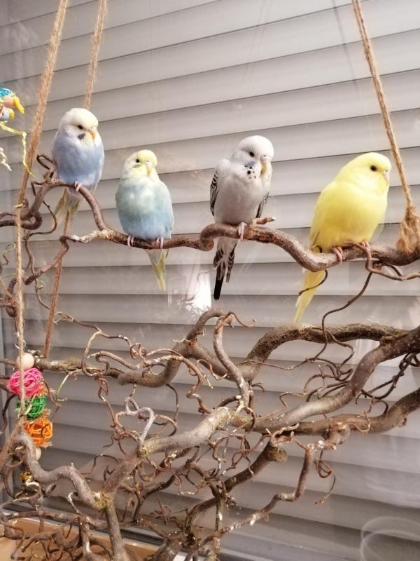 Luna, Coco, Tobi, Bonny