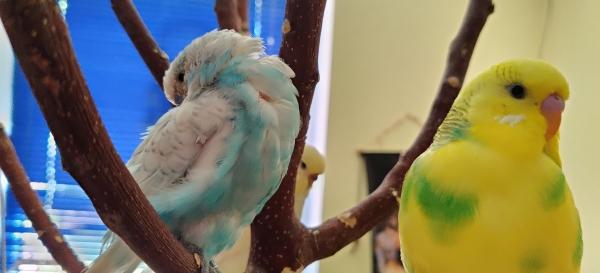 Ruhiger Tag im Vogelzuhause