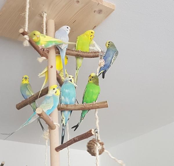 Alle rauf auf den Baum!
