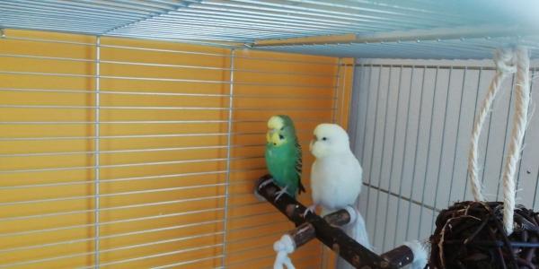 Sunny und Charlie