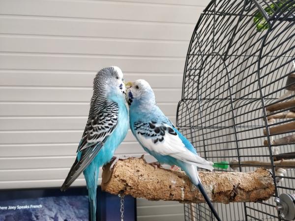 Koko(rechts) und Fred (links)