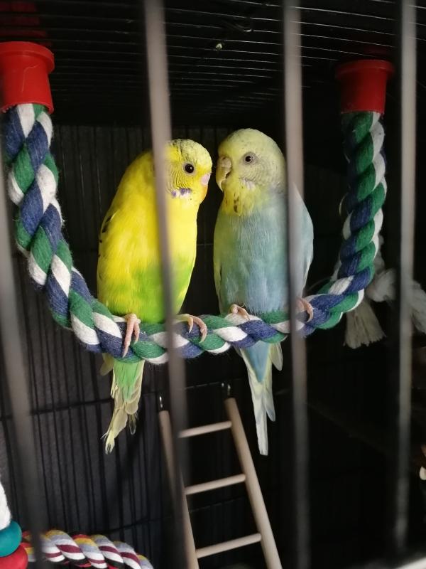 Rocky und Blondie sind zufrieden