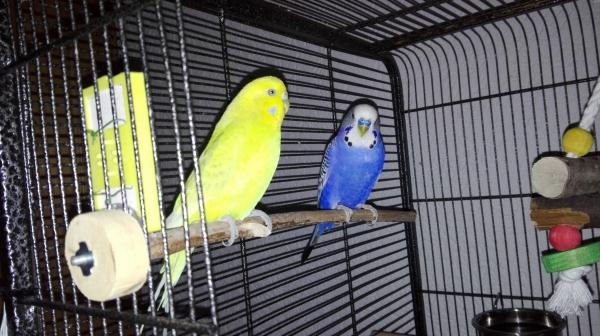 Henry und June