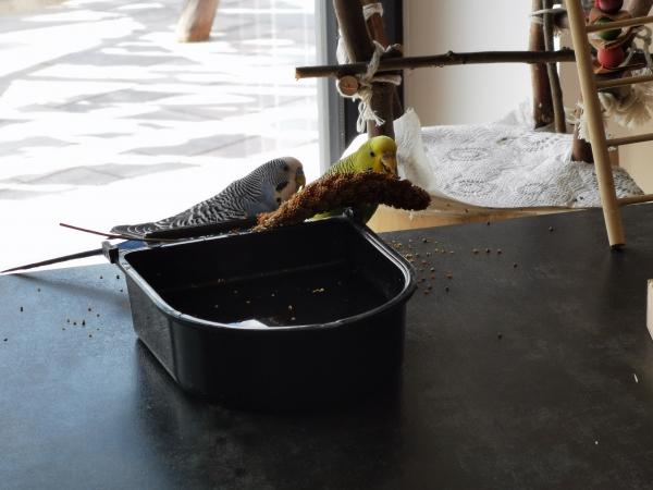Auf dem Tisch beim Futtern