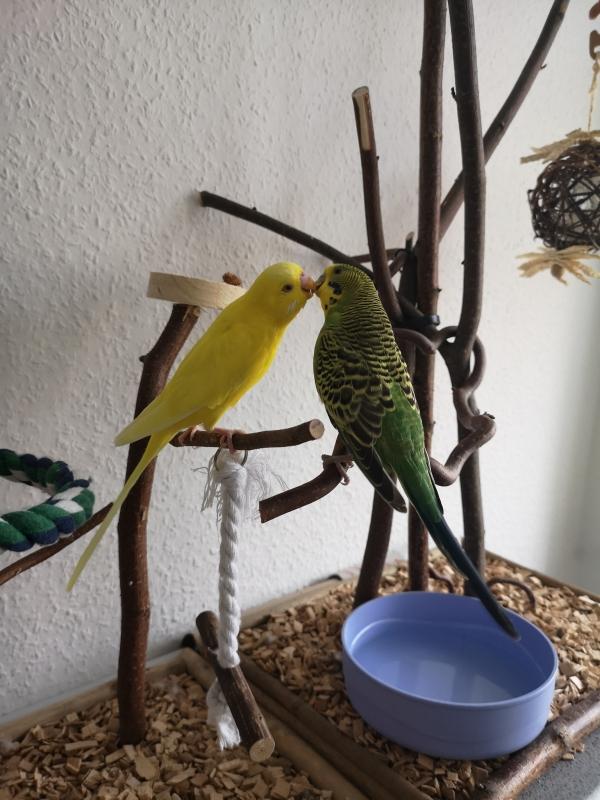 Tweety und Eddy