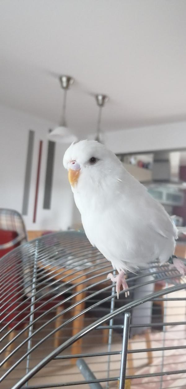 Poldis erster Freiflug im neuen Zuhause