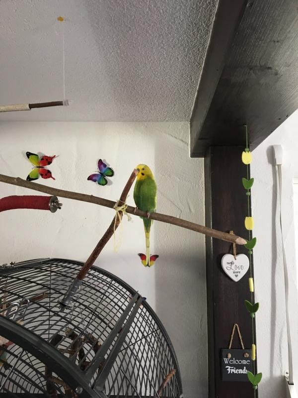 Marvin sucht ein Zuhause mit Artgenossen