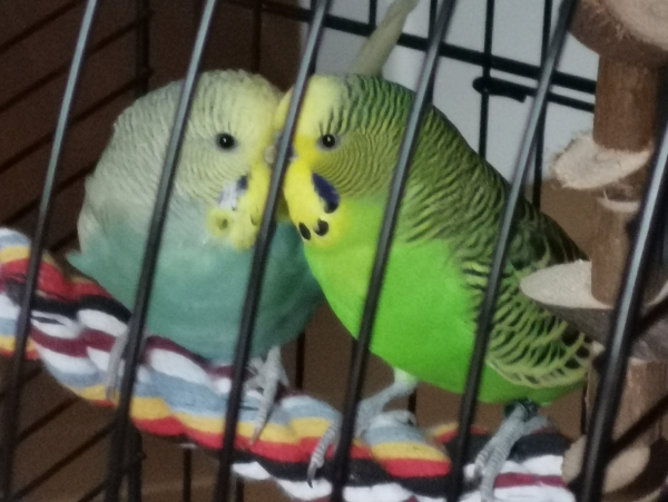 Mimi und Gustl  erholen sich vom ersten Freiflug