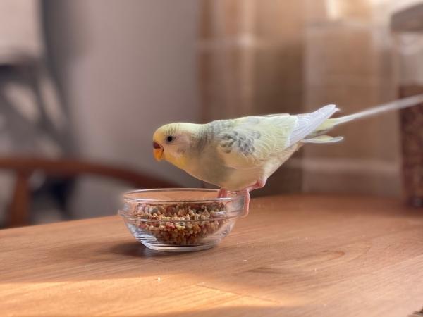 Peeta eating breakfast