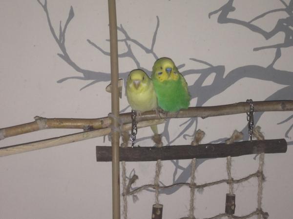 Kätie und Tobi auf ihrem Baum