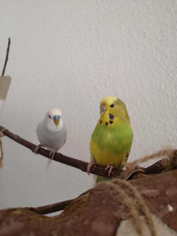 Hartmut und Cookie beim Freiflug