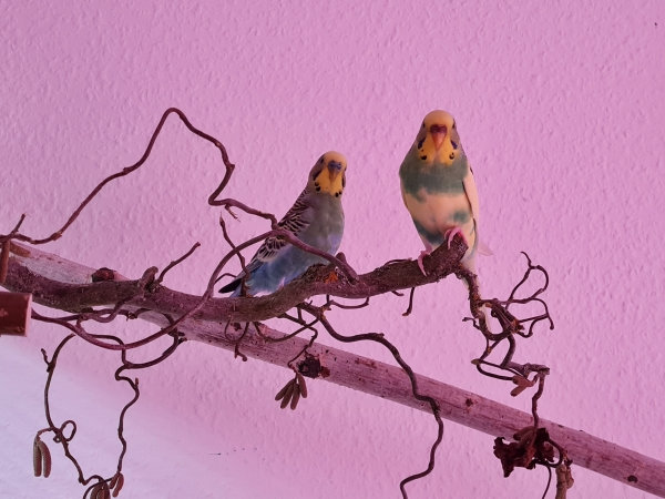 Bild von Peaches und Balou