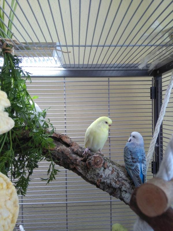 Kiki und Fips im Gespräch