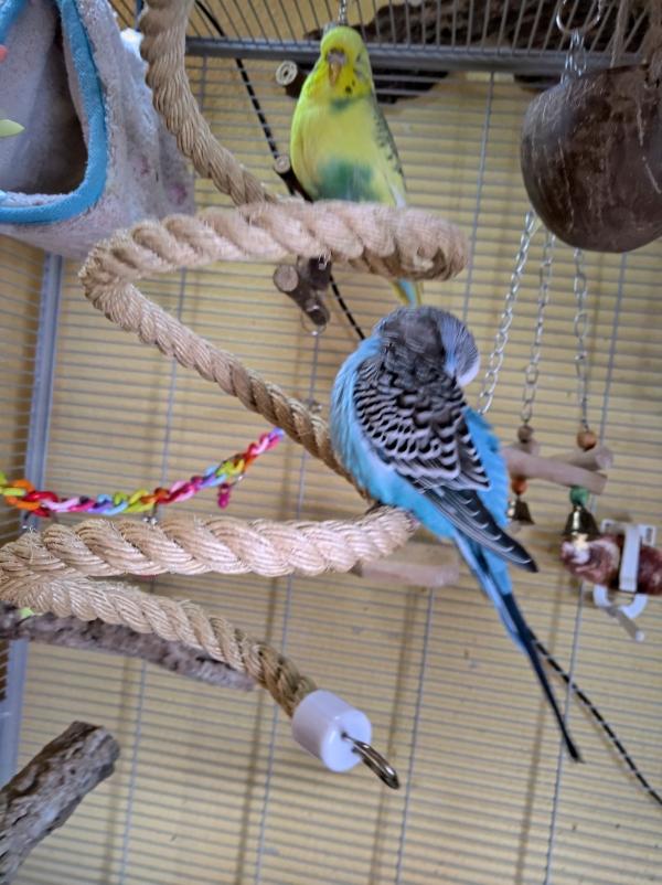 Lola und Vivi auf der Seilspirale