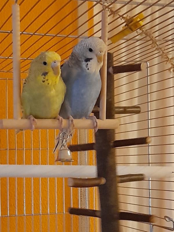Bubi und Cooki