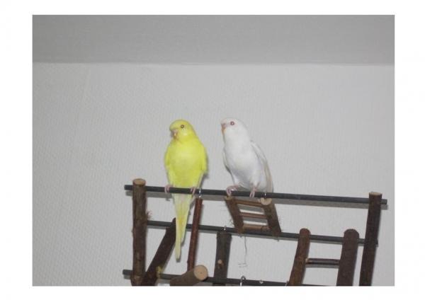 Tweety und Jerry als Jungvögel