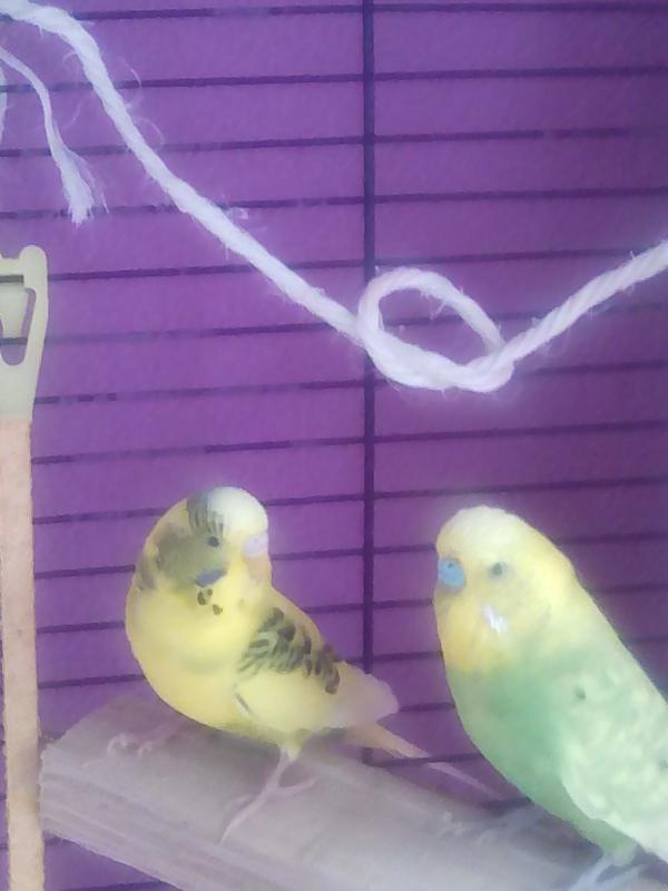 Links Moritz und rechts Sunshine