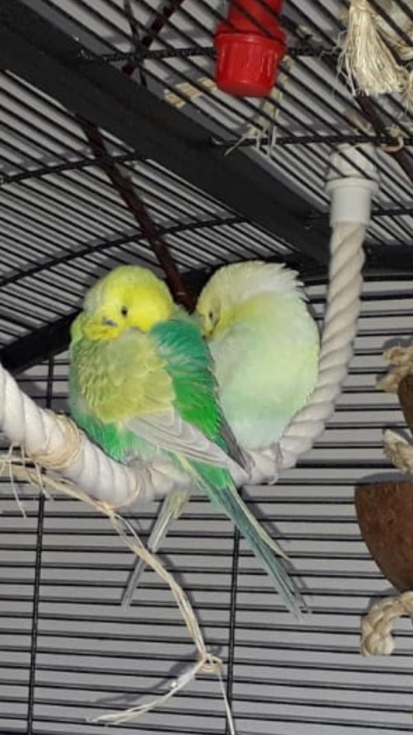 Nicki und Luc