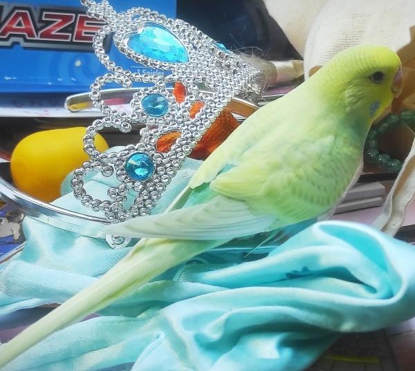Prinz Sunny