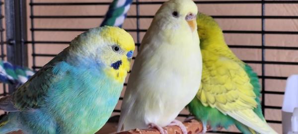 Die 3 vom Ast : Piepsie & Snoopy und Abby