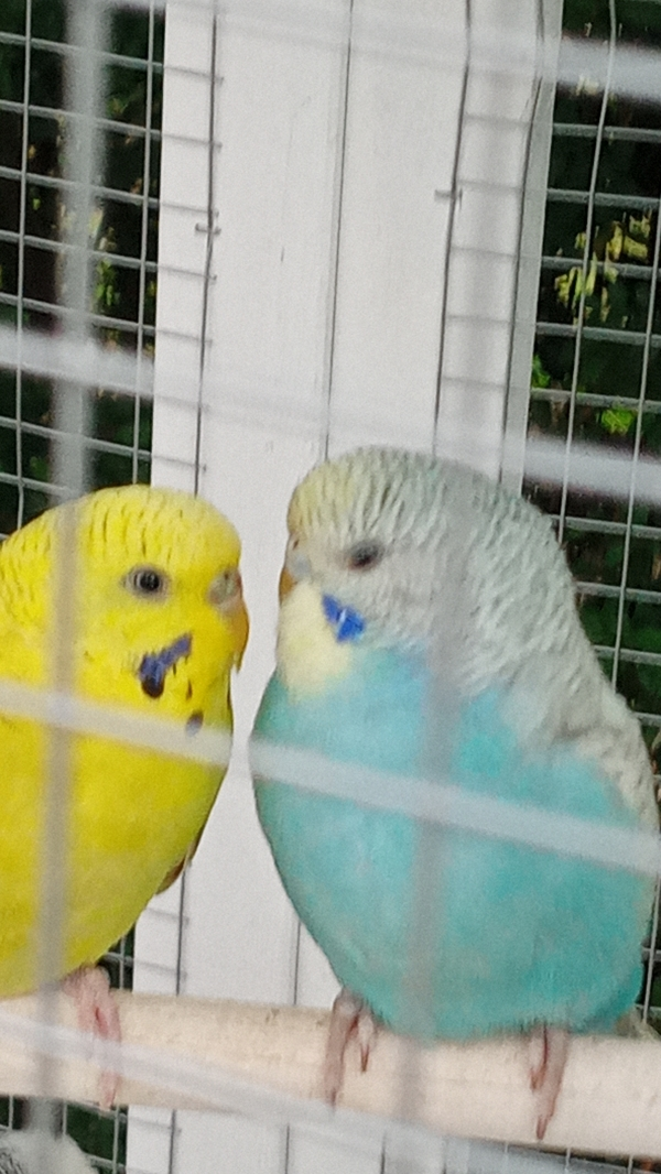 Tweety und Pipi