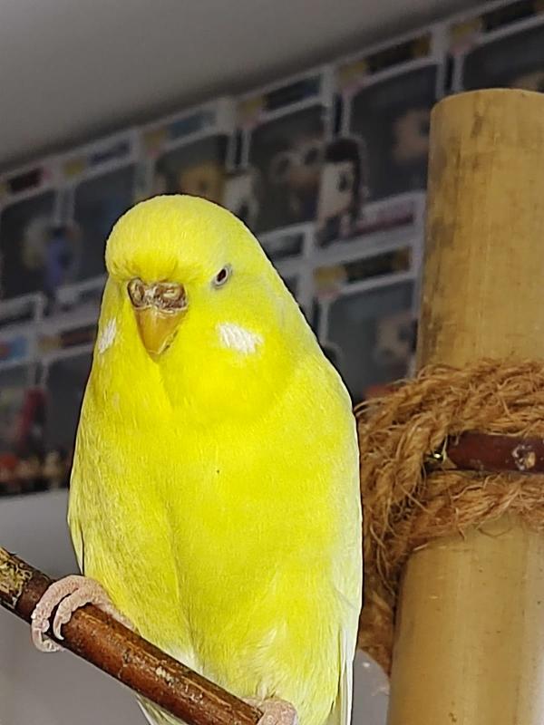 Meine gelbe Dame