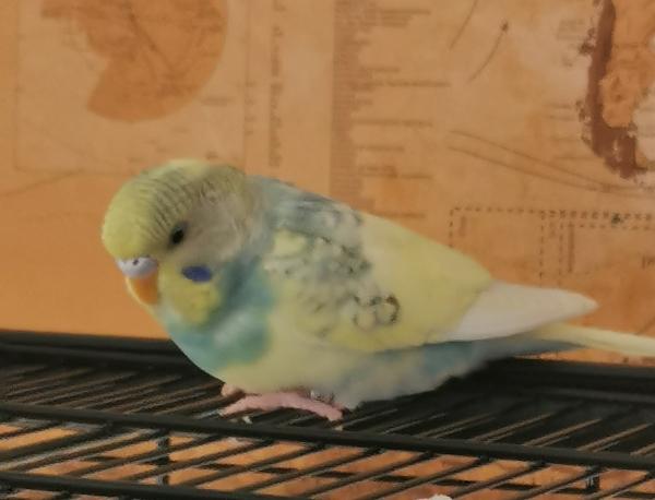 Bubi entdeckt die Welt