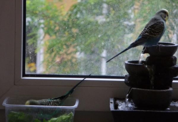 Springbrunnenbad mit Grünmenue