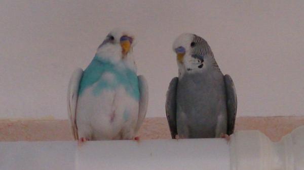 Hitze Vögel