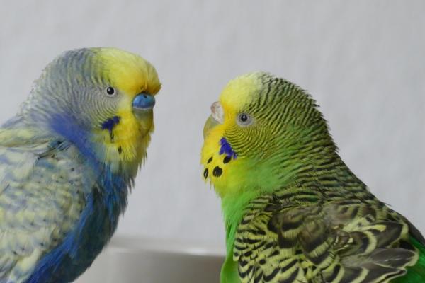 Lilli und Carlo: Eine neue Liebe ist wie ein neues Leben