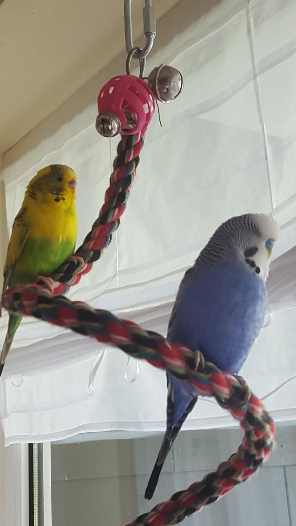 Mucki und Tweety bei der Siesta