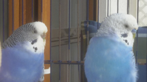 Emmi und Mogli