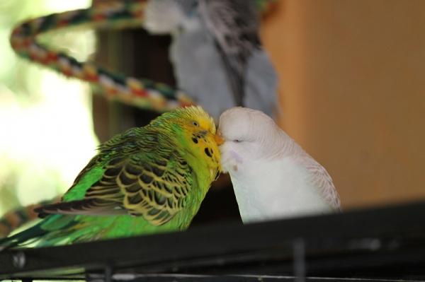Bobby und Lara  frischverliebt