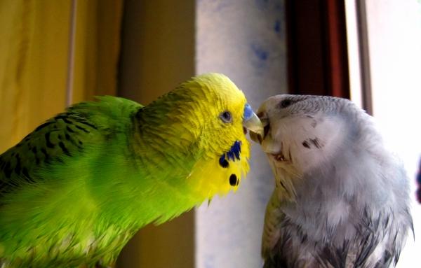 Nach dem Bad folgt ein Kuss