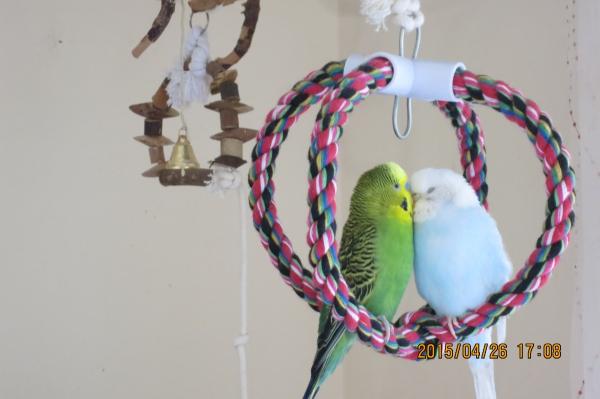 Pico und Ronja in der Schaukelkrone