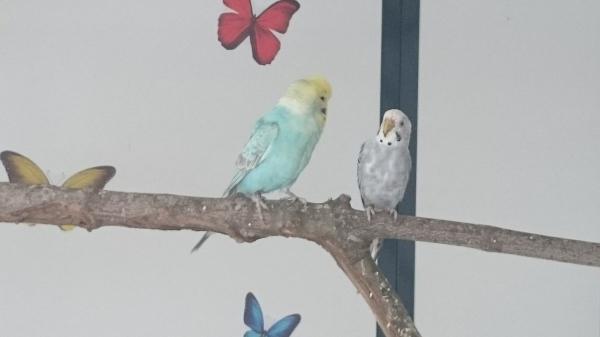 Blue und Kiki