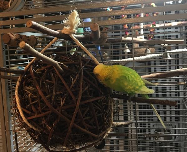 Firli untersucht Weidenball