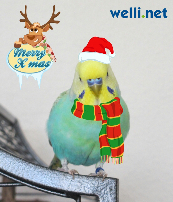 Bountys Weihnachts-Outfit